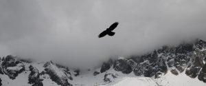 Bird flying over a mountain